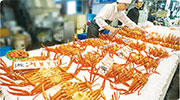 鳥取漁港睇拍賣 紅楚蟹「反肚」保鮮 鬼太郎之鄉百元歎全蟹餐
