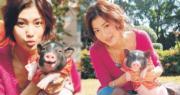 李彩華生肖屬豬,趁新年假期帶住她的寵物豬「豬仔」去公園行大運。(資料圖片 / 明報製圖)