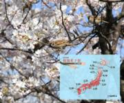 日本櫻花2019:福岡熊本最早可賞櫻 東京料3月22日開花