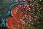 【梅花綻放】福建省福州市林陽寺的梅花。圖片攝於2019年1月9日。(新華社)
