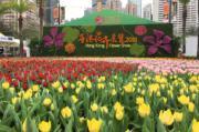 【香港花卉展覽2018】鬱金香花海(丘萃瑩攝)