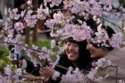 【世界各地賞櫻花】日本東京櫻花盛開,吸引遊人自拍留念。(法新社,攝於2019年3月27日)