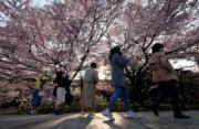 【世界各地賞櫻花】日本東京櫻花盛開,吸引遊人賞櫻拍照。(法新社,攝於2019年3月27日)