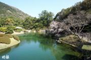 【世界各地賞櫻花】日本四國高松栗林公園櫻花(文子洋攝於2017年)