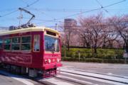 【世界各地賞櫻花】日本東京飛鳥山公園櫻花(都營交通facebook圖片)