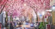 【Long Exposure長時間曝光攝影】2019年4月8日,德國波恩(Bonn)櫻花盛開。(法新社)