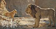 《獅子王》美開畫破紀錄