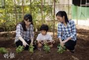 2014年8月,日本皇室發放真子公主(右)、佳子公主(左)、悠仁王子(中)的合照。(法新社)
