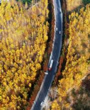 2018年11月13日,臨沂市郯城縣勝利鎮道路兩旁的銀杏樹(新華社)