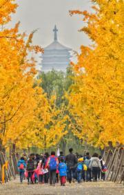 2018年10月25日,北京園博園的銀杏大道(新華社)