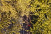 2018年11月4日,江蘇省揚州市江都水利樞紐風景區(新華社)
