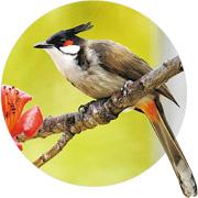 綠色生活:打開聲音地圖 邊行邊認 處處聞啼鳥 叫聲知多少
