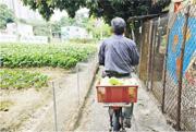 未來城市:自給率低 疫情下菜價浮動 糧食防線 本地菜做得到?