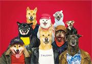 Bulletin:狗狗穿時裝上陣 維護動物權益