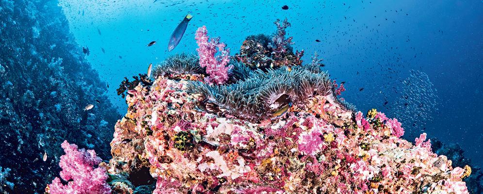世界十大潛水勝地 泰南小島多變海底地貌 紫紅軟珊瑚駱駝蝦爭寵