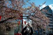 【世界各地賞櫻花】日本東京:攝於2020年3月12日,東京上野公園櫻花(法新社)