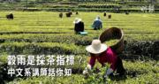 穀雨·二十四節氣:穀雨是採茶指標?穀雨習俗畫五毒?中文系講師話你知