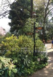 遊覽吉卜力美術館後,在出口轉左,可到井之頭公園賞花。(黃廷希攝,圖片攝於2017年4月)