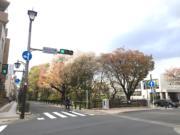 沿路走回三鷹車站,可欣賞自然美景。(黃廷希攝,圖片攝於2017年4月)