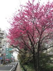 (黃廷希攝,圖片攝於2017年4月)