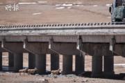 2020年,藏羚羊穿過一座大橋底部,前往可可西里。(新華社)