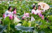 208年8月6日,幾名身著漢服的女孩在武漢東湖磨山荷花園賞荷留下倩影。(中新社)