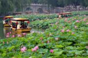 2017年7月,遊客在北京北海公園乘船賞荷花。(新華社)