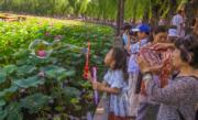 2017年夏天,北京北海公園荷花盛放。(新華社)