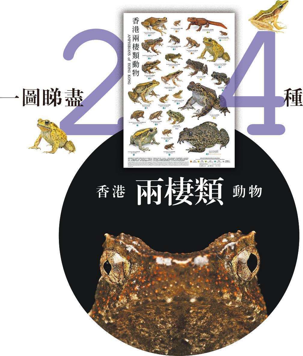 綠色生活:一圖睇盡24種香港兩棲類動物