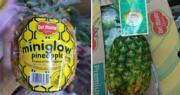 當造菠蘿多來自菲律賓 果商教路:金黃蜜糖菠蘿甜度高  青綠菠蘿偏酸較耐放