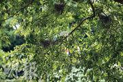 林錦公路自駕生態遊  遠觀鷺鳥林  賞蘭花遊竹徑