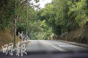 林錦公路:大樹夾道  輕鬆遊車河