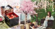 OL閨蜜下午茶之選 期間限定櫻花下午茶@銅鑼灣ZENG 維港海景伴櫻花庭院佈置
