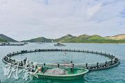 跟團遊鴨脷洲南丫島 「漁」樂無窮 「包魚」大滿足