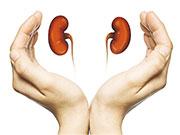 腎藏 vs. 腎臟 中西醫定義大不同