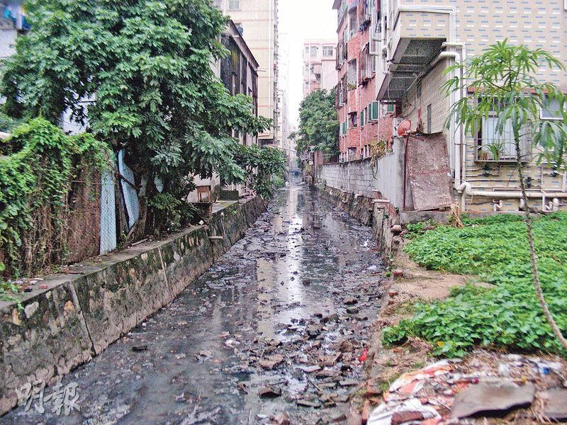 茅洲河支流共和涌,各種垃圾幾乎填滿半條河涌,蚊蟲和老鼠橫行,河水發出的惡臭令人作嘔,居住在河涌旁的居民都不敢打開臨渠的窗口。(李泉攝)