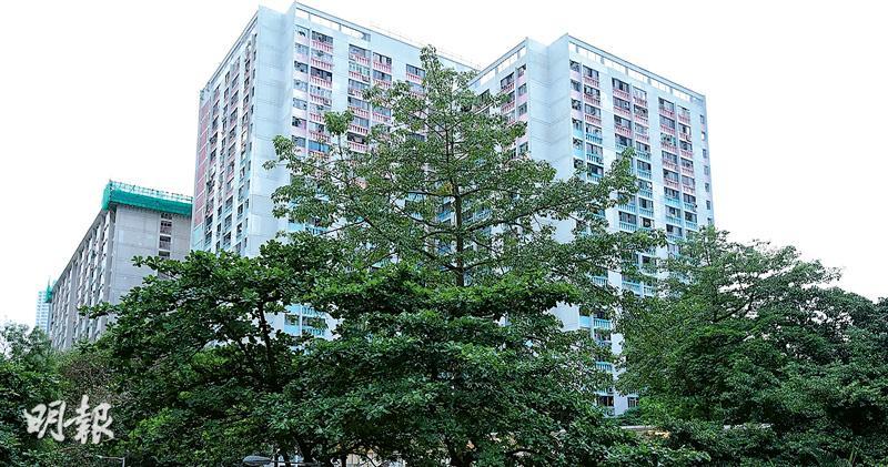 特稿:房署修樹驗樹 夫妻公司包攬 7分區3區夫妻檔中標 學者批審核不力