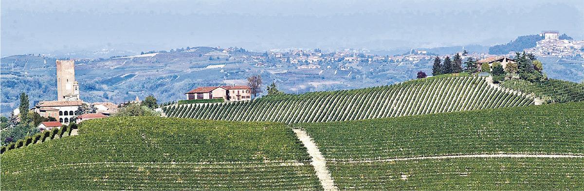 意大利反叛葡萄酒