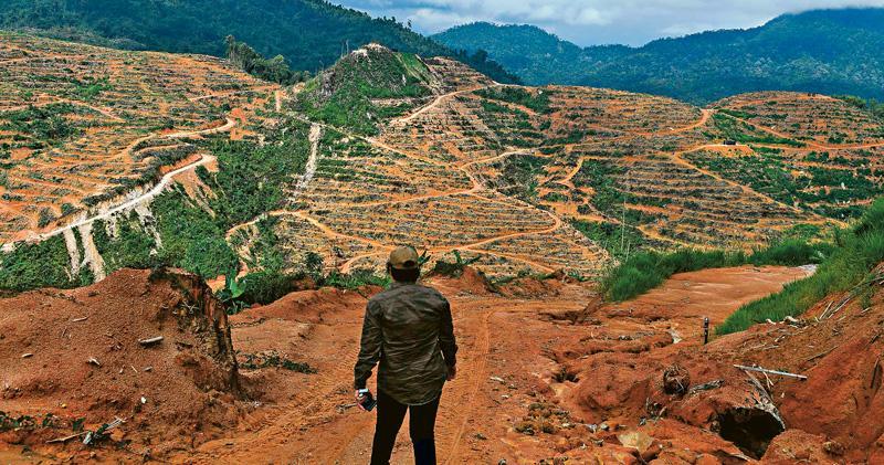 人們對糧食的需求龐大,但廣泛食用的種類不多,而為大量種植作物,森林會被砍伐為農地。圖為馬來西亞吉隆坡郊區一個榴蓮種植園,這處本來是一座森林,但因為中國對榴蓮需求大而改建。(法新社)