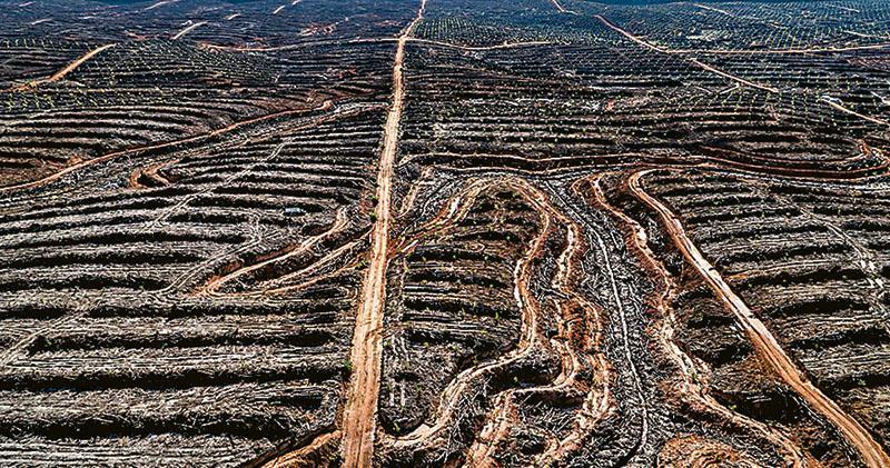 歷來最詳盡剖析:百萬物種瀕滅絕  聯國自然報告警告人類入絕路