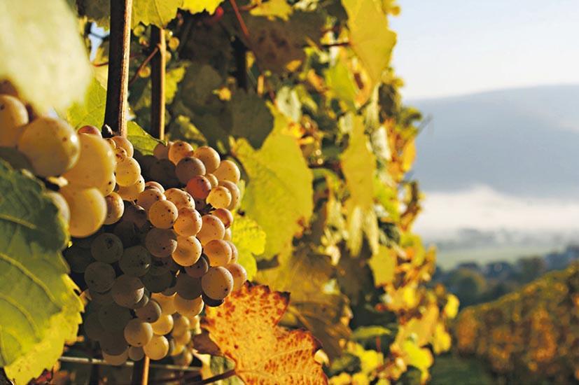 Wine﹕酒標辨甜度 讀懂雷司令