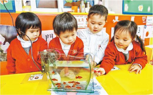 九龍城灣仔南區幼園 逾半無參加幼教計劃