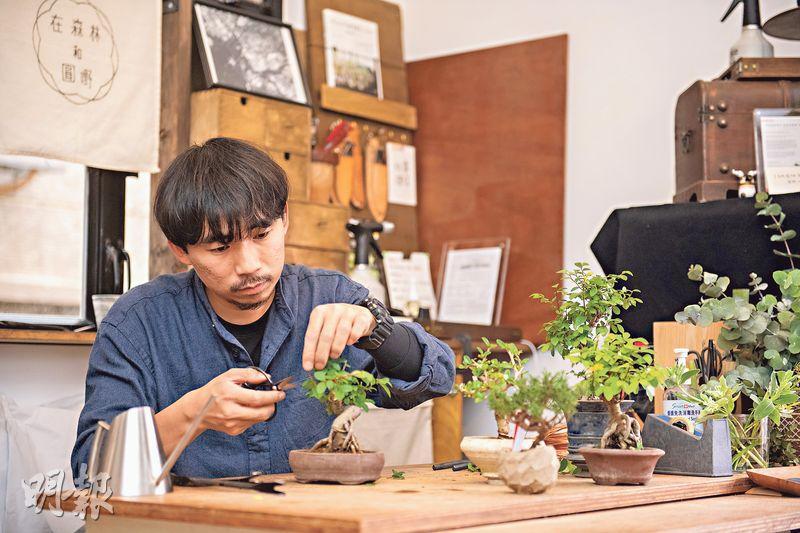 造型多變:日本盆栽的樹形可分為直幹式、懸崖式等,按照樹木原貌順勢而為,用修剪等整姿方法去為其造型。(林靄怡攝)
