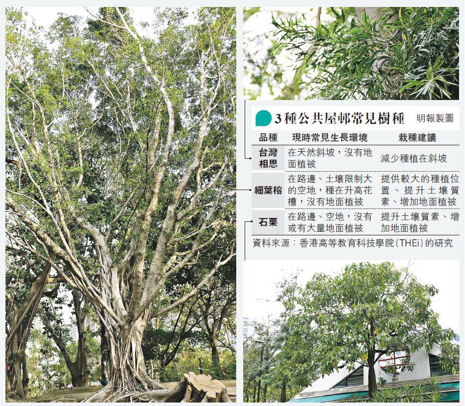 研3萬公屋樹  尋植木良方  THEi分析30品種合適栽種位置