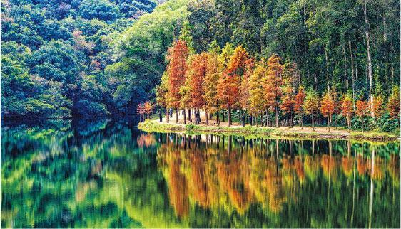 分解葉綠素免養分流失 樹木披紅衣 「有營」過冬