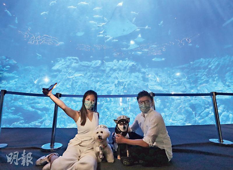 汪星人潛入「海底」 與魔鬼魚鬥搶鏡